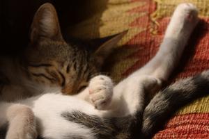 у котенка дергается лапа