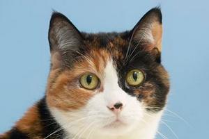 идет пена изо рта у кошки