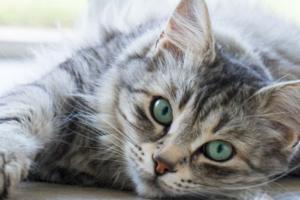 Какие капли от глистов на холку выбрать для кошки?