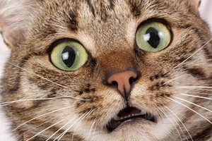 капли от глистов на холку для кота