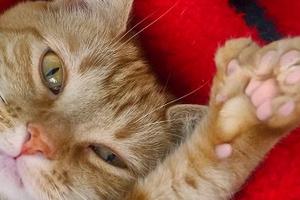 наросты на подушечках лап у котенка