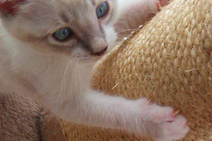 наросты на подушечках лап у котика