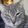 Опухла щека у кошки — первая помощь питомцу