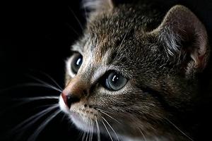 шишка на животе у кота