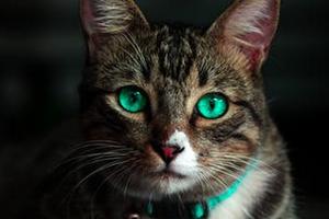 шишка на животе у котика