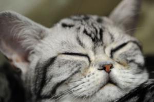 Как быть, если у кошки появились глисты?
