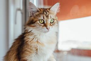 у кошки идет кровь из матки причины