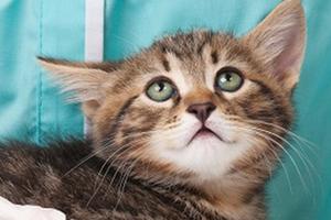 у кошки идет пена изо рта причины