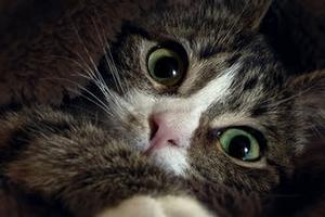 у кошки шишка на животе