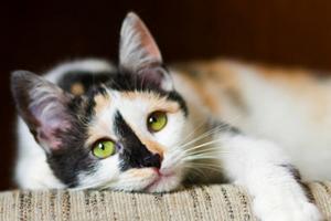 у кошки течет кровь из матки