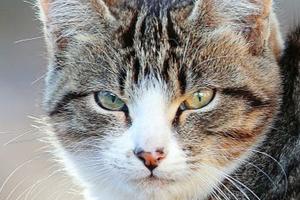 у котика опухоль под глазом