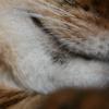 Появилась чернота в уголках рта кошки — как избавиться от тревожного симптома?
