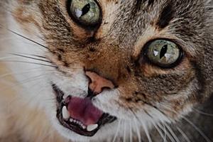 черные пятна на языке у кошки