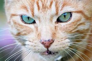 черные пятна в уголках рта кошки