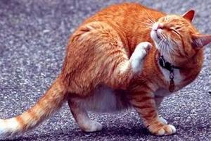 чешет спину кошка