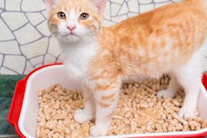 диарея у котенка