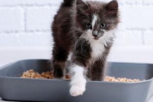 диарея у котика