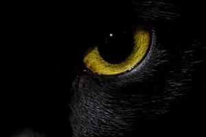 гноится глаз у кошки