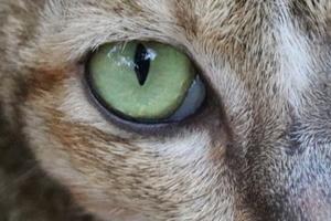 гноится глаз у кота