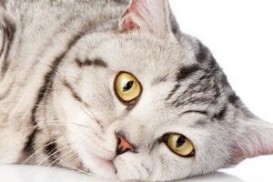 гноится глаз у котика