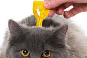 Как подобрать эффективные капли от блох у кошек?