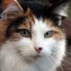 Корки на носу у кошки — что спровоцировало появление симптома?