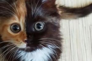 Кошка чешет попу об ковер – признак глистов?