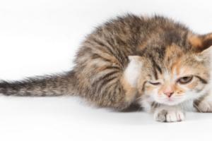Кошка чешет спину — как помочь любимцу?