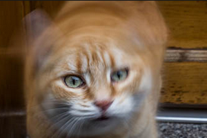 кошка дергает головой