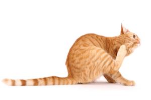 кошка сильно чешет спину