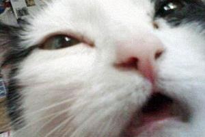 кошка сильно чихает