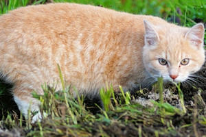 кошку укусил клещ за живот