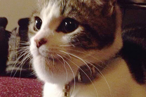 кошку укусила оса за подбородок