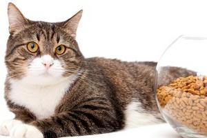 кот отказывается от еды
