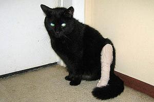 котенок хромает на задние лапы