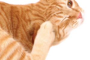котик чешет попу об ковер