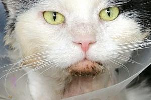 мокрый подбородок у кота