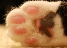 на лапах у кошек появились наросты