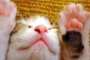 облазят подушечки лап у кошки