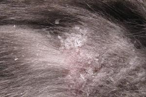 шелушиться кожа у кошек