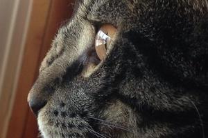шишка у кошки на носу с шерстью