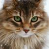 Из-за чего у кошек может шелушиться кожа?