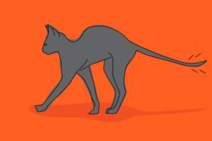 Чем можно помазать, если у кошки болит основание хвоста?