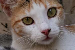 у кошки изменился окрас