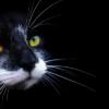 Стоит ли что-то делать, если у кошки ломаются усы?