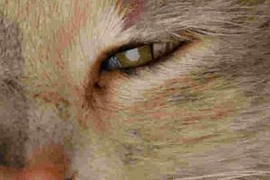 у кошки мутный глазик