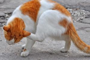 У кошки обвис хвост — стоит ли переживать за здоровье животного?