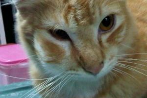 у кошки опухла морда и болит