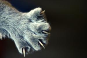 У кошки слоятся ногти — как помочь питомцу?