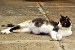 у кошки висит хвост
